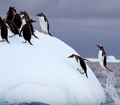 warm up to the iceberg principle when buying a tms